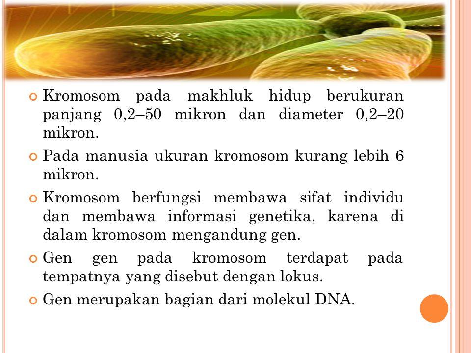 Kromosom pada makhluk hidup berukuran panjang 0,2–50 mikron dan diameter 0,2–20 mikron. Pada manusia ukuran kromosom kurang lebih 6 mikron. Kromosom b