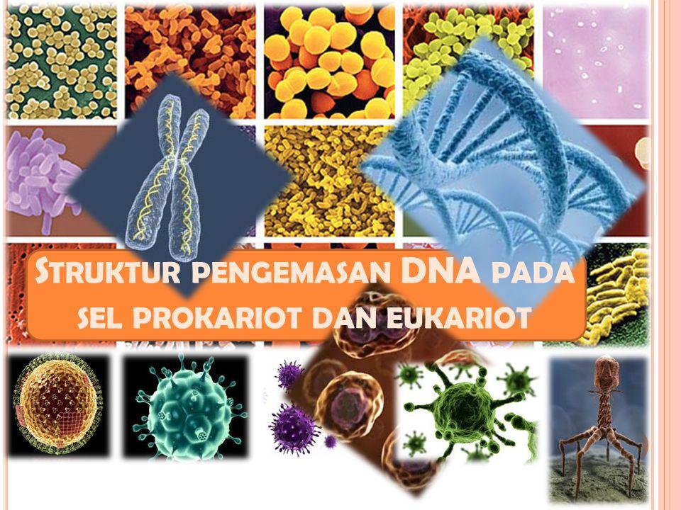 S TRUKTUR PENGEMASAN DNA PADA SEL PROKARIOT DAN EUKARIOT