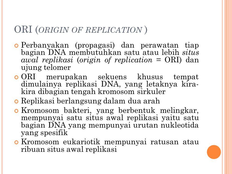 ORI ( ORIGIN OF REPLICATION ) Perbanyakan (propagasi) dan perawatan tiap bagian DNA membutuhkan satu atau lebih situs awal replikasi ( origin of repli
