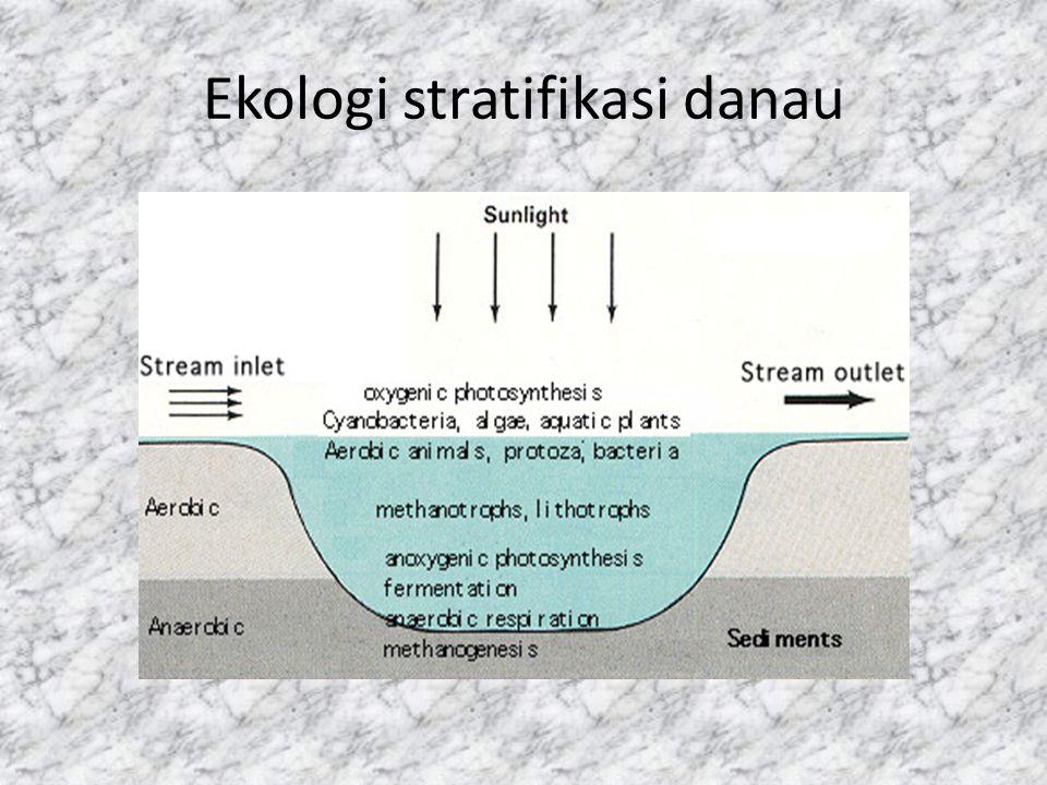 Ekologi stratifikasi danau