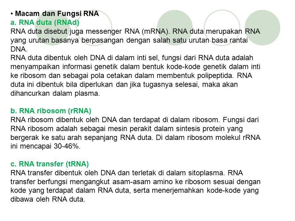 2. Struktur RNA Molekul RNA mempunyai bentuk yang berbeda dengan DNA. RNA memiliki bentuk pita tunggal dan tidak berpilin. Susunan RNA terdiri atas: a
