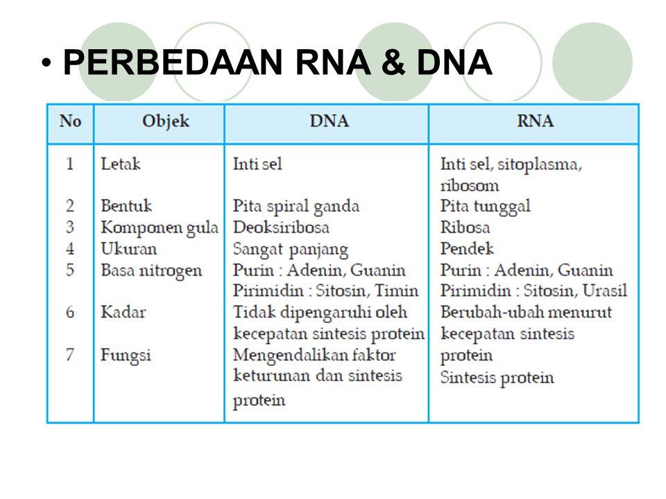 Macam dan Fungsi RNA a. RNA duta (RNAd) RNA duta disebut juga messenger RNA (mRNA). RNA duta merupakan RNA yang urutan basanya berpasangan dengan sala