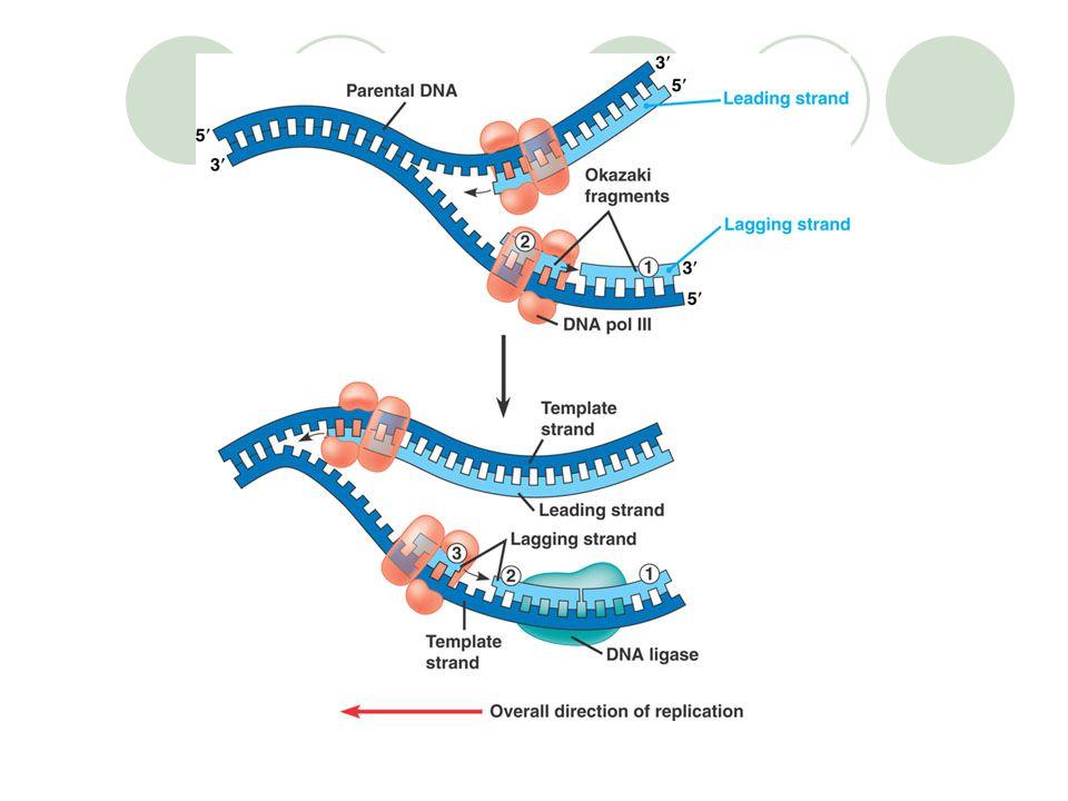 SINTESIS PROTEIN Replikasi Replikasi : proses perbanyakan bahan genetik (genom : DNA dan RNA) Proses yg mengawali pertumbuhan sel Replikasi akan diiku