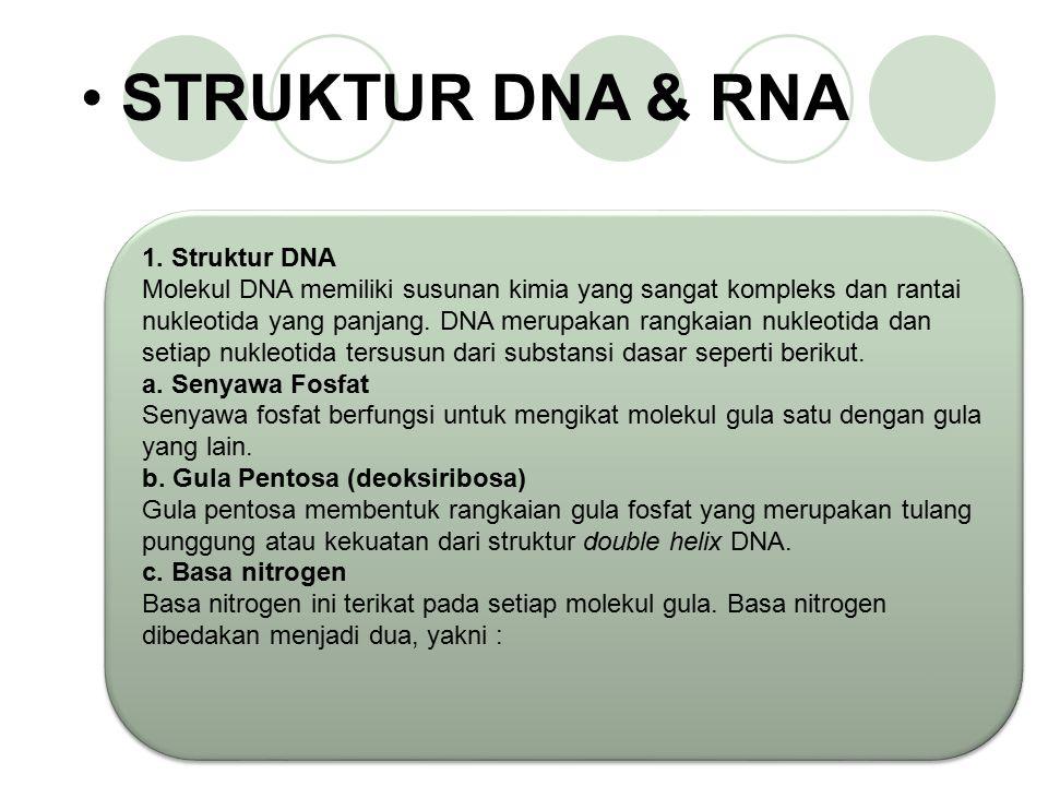 ASAM NUKLEAT Asam Nukleat adalah suatu polimer nukleotida yg berperanan dlm penyimpanan serta pemindahan informasi genetik (polinukleotida) Asam nukle