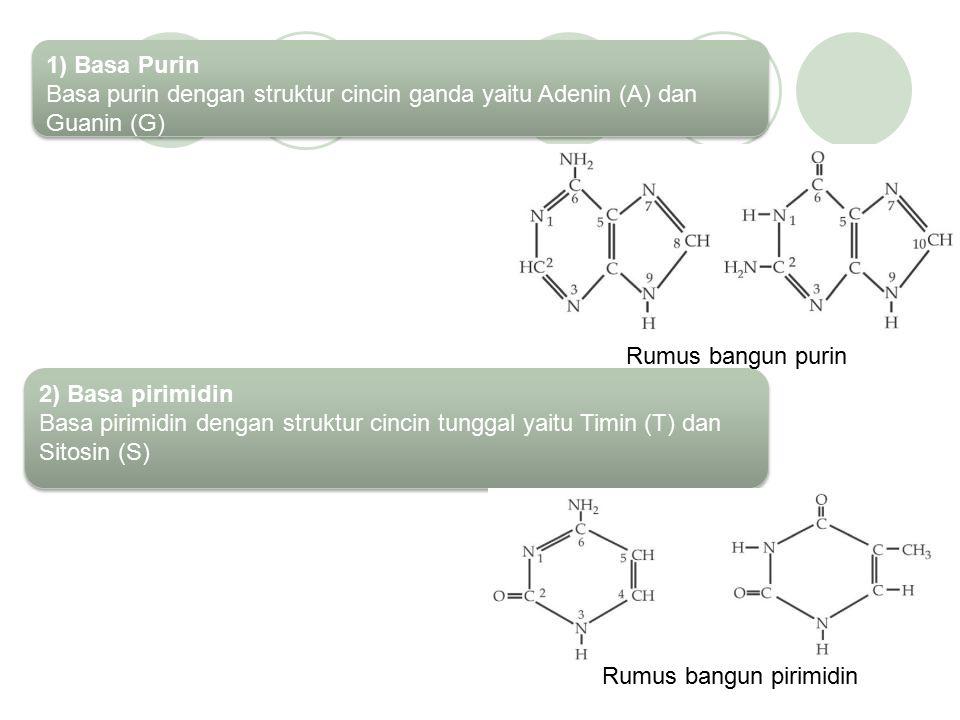 STRUKTUR DNA & RNA 1. Struktur DNA Molekul DNA memiliki susunan kimia yang sangat kompleks dan rantai nukleotida yang panjang. DNA merupakan rangkaian