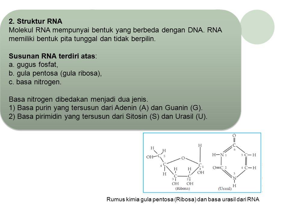 2) Basa pirimidin Basa pirimidin dengan struktur cincin tunggal yaitu Timin (T) dan Sitosin (S) Rumus bangun purin 1) Basa Purin Basa purin dengan str