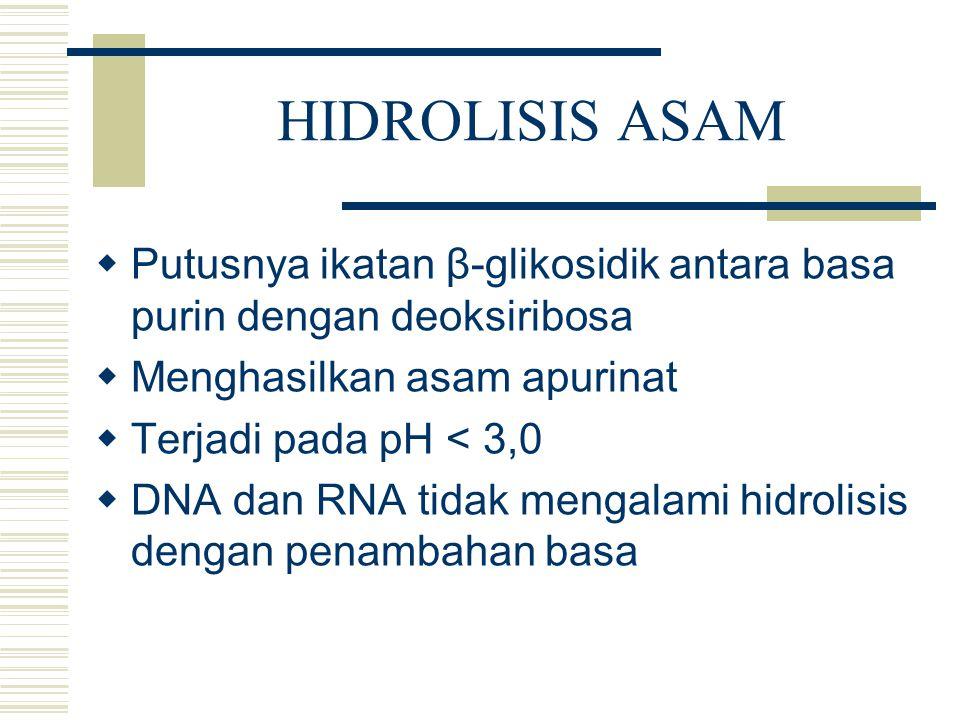 HIDROLISIS ASAM  Putusnya ikatan β-glikosidik antara basa purin dengan deoksiribosa  Menghasilkan asam apurinat  Terjadi pada pH < 3,0  DNA dan RN