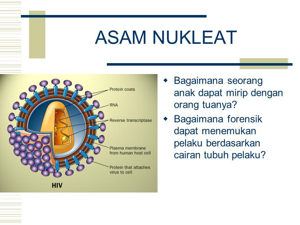 DEFINISI Makromolekul yang terdapat di dalam inti sel yang mengandung semua informasi yang diperlukan baik untuk aktivitas maupun reproduksi sel Terdiri atas:  DNA : deoxyribonucleic acid  RNA : ribonucleic acid