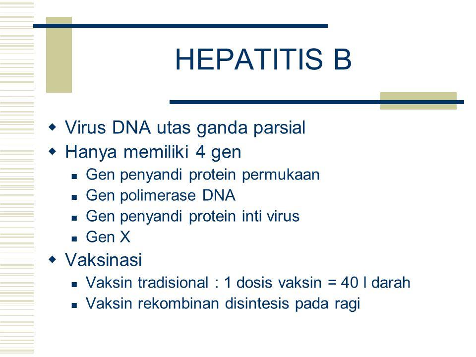 HEPATITIS B  Virus DNA utas ganda parsial  Hanya memiliki 4 gen Gen penyandi protein permukaan Gen polimerase DNA Gen penyandi protein inti virus Ge