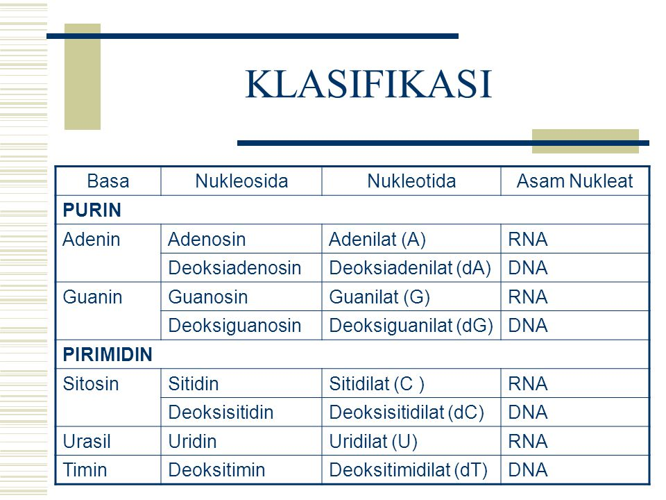KLASIFIKASI BasaNukleosidaNukleotidaAsam Nukleat PURIN AdeninAdenosinAdenilat (A)RNA DeoksiadenosinDeoksiadenilat (dA)DNA GuaninGuanosinGuanilat (G)RN