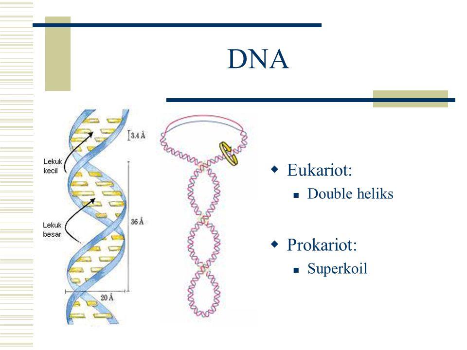 RNA  mRNA (messenger RNA) Membawa informasi genetik dari DNA ke ribosom untuk sintesis protein  rRNA (ribosomal RNA) Penyusun 65 % ribosom, sisanya protein Mengenali mRNA  tRNA (transfer RNA) Menterjemahkan kode genetik dari mRNA menjadi asam amino tertentu