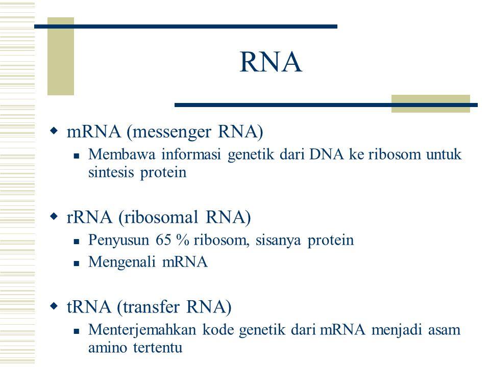 RNA  mRNA (messenger RNA) Membawa informasi genetik dari DNA ke ribosom untuk sintesis protein  rRNA (ribosomal RNA) Penyusun 65 % ribosom, sisanya