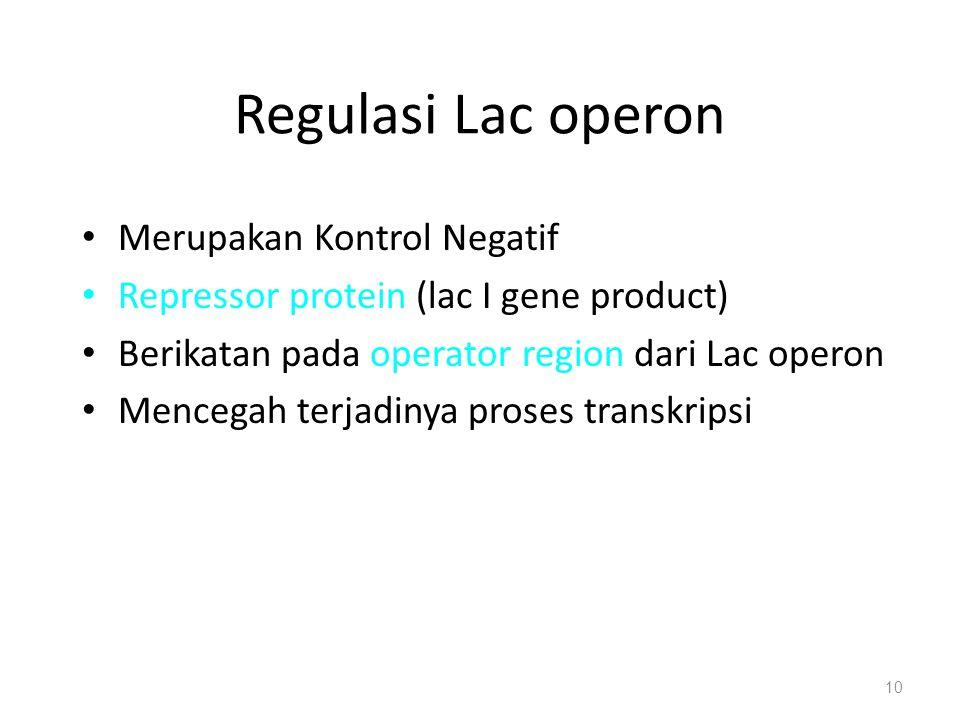Regulasi Lac operon Merupakan Kontrol Negatif Repressor protein (lac I gene product) Berikatan pada operator region dari Lac operon Mencegah terjadiny