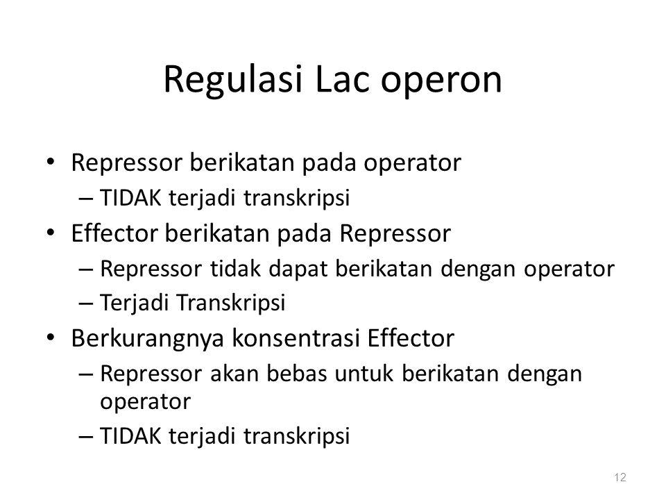 Regulasi Lac operon Repressor berikatan pada operator – TIDAK terjadi transkripsi Effector berikatan pada Repressor – Repressor tidak dapat berikatan dengan operator – Terjadi Transkripsi Berkurangnya konsentrasi Effector – Repressor akan bebas untuk berikatan dengan operator – TIDAK terjadi transkripsi 12