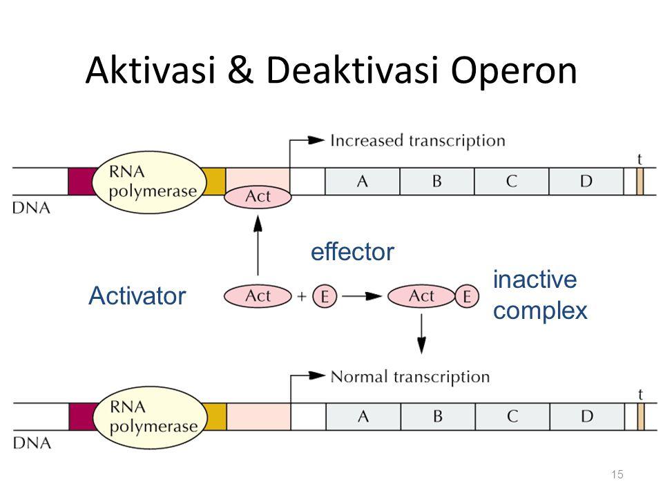Aktivasi & Deaktivasi Operon 15 Activator effector inactive complex