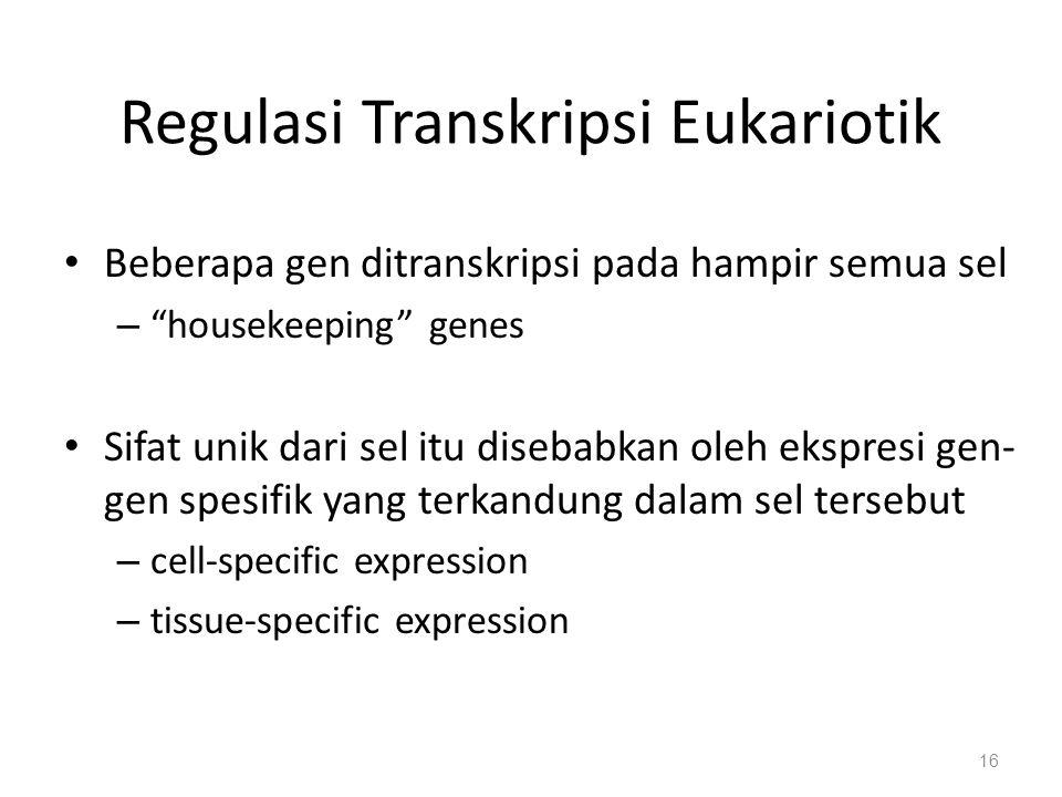 Regulasi Transkripsi Eukariotik Beberapa gen ditranskripsi pada hampir semua sel – housekeeping genes Sifat unik dari sel itu disebabkan oleh ekspresi gen- gen spesifik yang terkandung dalam sel tersebut – cell-specific expression – tissue-specific expression 16