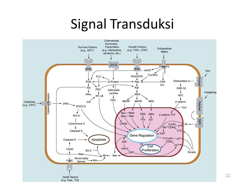Signal Transduksi 22