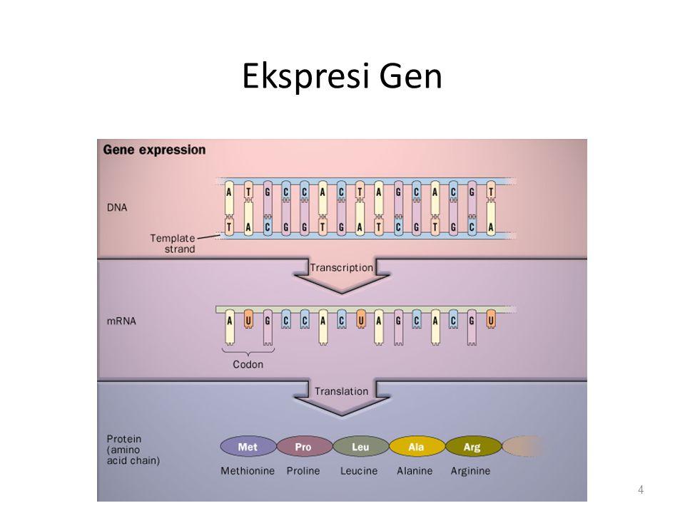 Ekspresi Gen 4