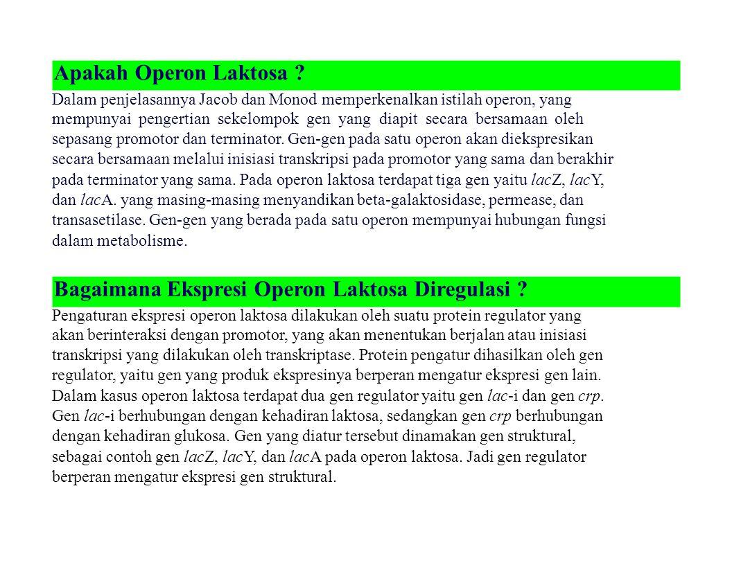 Apakah Operon Laktosa ? Dalam penjelasannya Jacob dan Monod memperkenalkan istilah operon, yang mempunyai pengertian sekelompok gen yang diapit secara