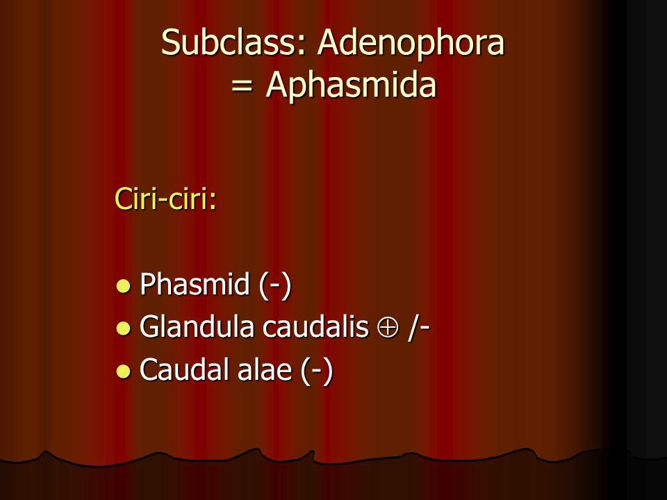 A = Draschia megastoma; B = H.muscae; C = H. majus A = Draschia megastoma; B = H.