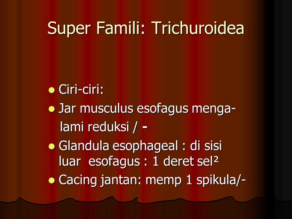 Spesies-spesies pada unggas Capillaria caudinflata = C.