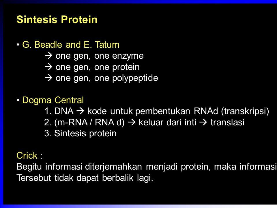 Sintesis Protein G. Beadle and E. Tatum  one gen, one enzyme  one gen, one protein  one gen, one polypeptide Dogma Central 1. DNA  kode untuk pemb