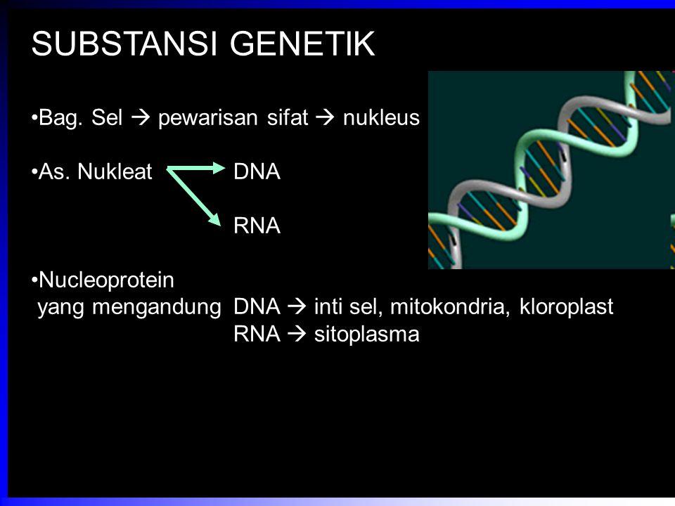 SUBSTANSI GENETIK Bag. Sel  pewarisan sifat  nukleus As. NukleatDNA RNA Nucleoprotein yang mengandungDNA  inti sel, mitokondria, kloroplast RNA  s