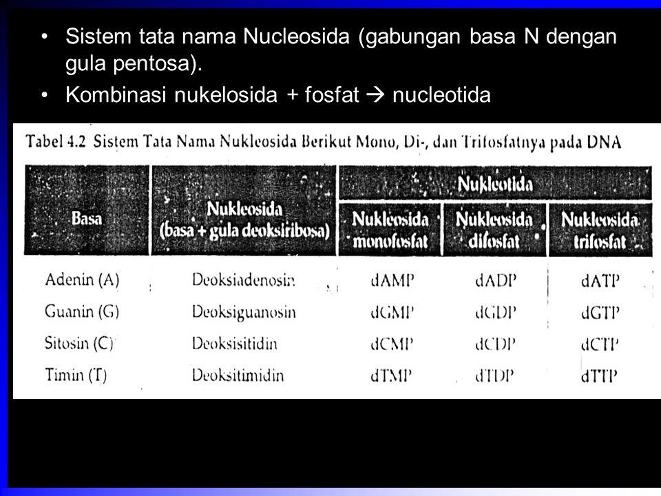 Sistem tata nama Nucleosida (gabungan basa N dengan gula pentosa). Kombinasi nukelosida + fosfat  nucleotida