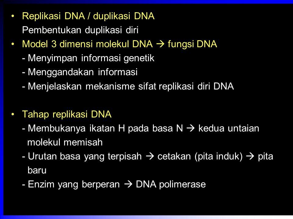 Replikasi DNA / duplikasi DNA Pembentukan duplikasi diri Model 3 dimensi molekul DNA  fungsi DNA - Menyimpan informasi genetik - Menggandakan informa