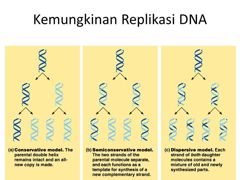 Kemungkinan Replikasi DNA 11