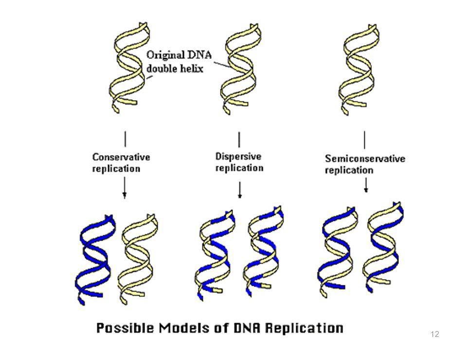 12 Kemungkinan Replikasi DNA