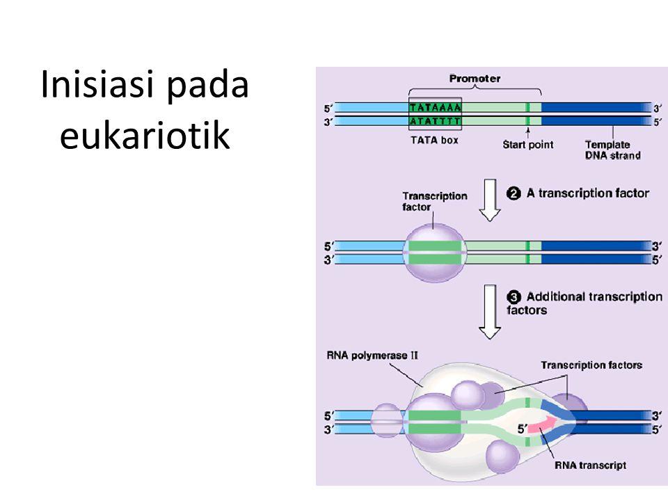 Inisiasi pada eukariotik 26