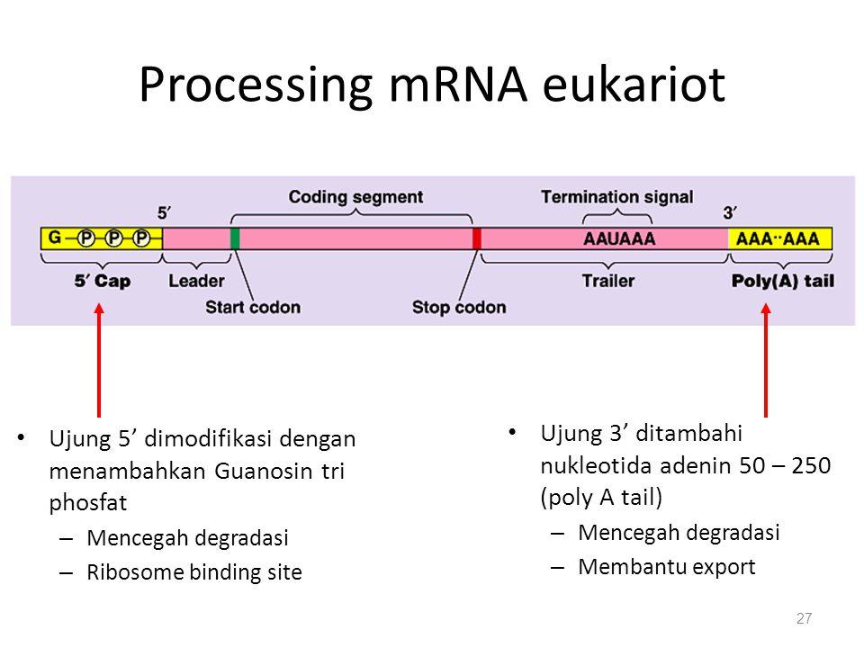 Processing mRNA eukariot Ujung 5' dimodifikasi dengan menambahkan Guanosin tri phosfat – Mencegah degradasi – Ribosome binding site Ujung 3' ditambahi