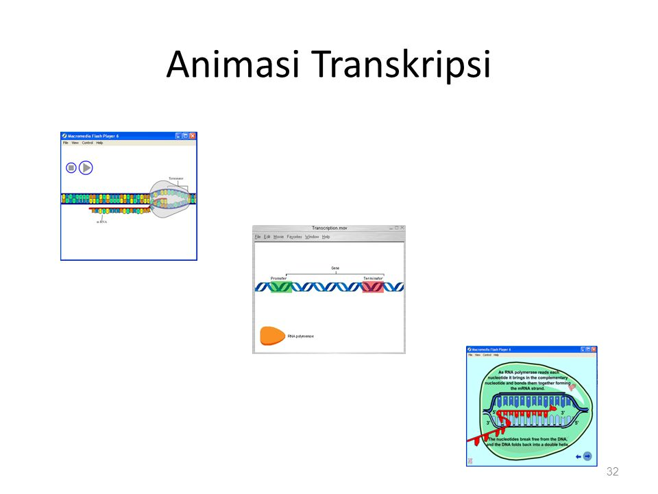 Animasi Transkripsi 32