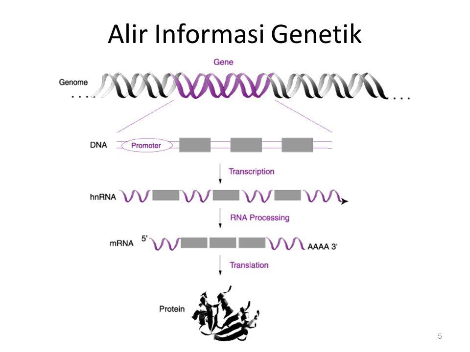 Alir Informasi Genetik 5