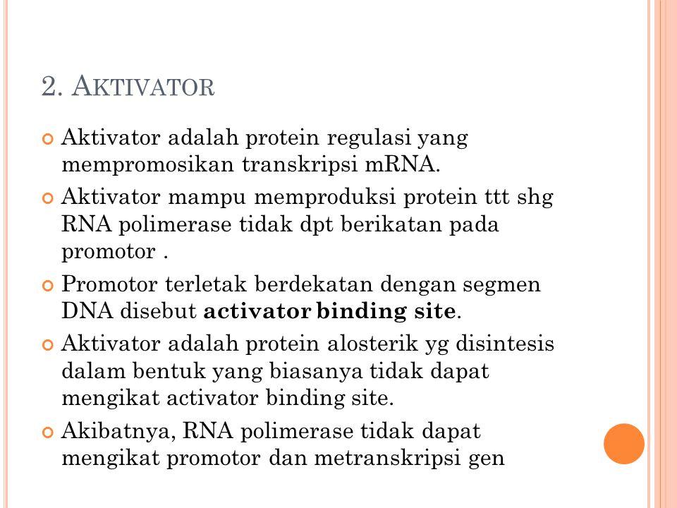 2. A KTIVATOR Aktivator adalah protein regulasi yang mempromosikan transkripsi mRNA. Aktivator mampu memproduksi protein ttt shg RNA polimerase tidak