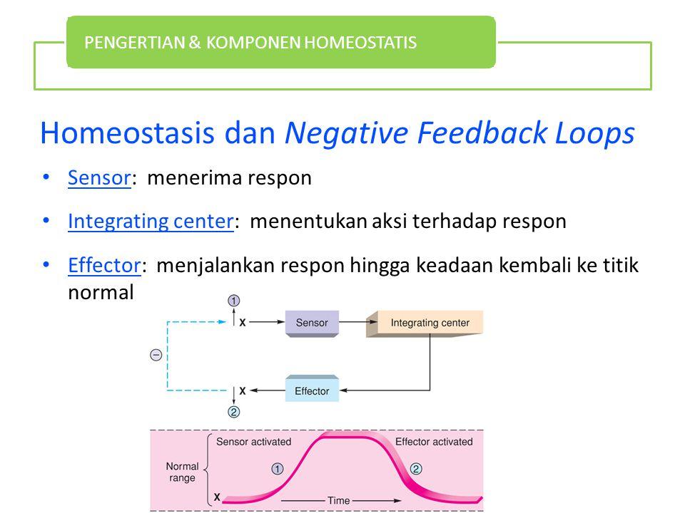 Homeostasis dan Negative Feedback Loops Sensor: menerima respon Integrating center: menentukan aksi terhadap respon Effector: menjalankan respon hingga keadaan kembali ke titik normal PENGERTIAN & KOMPONEN HOMEOSTATIS