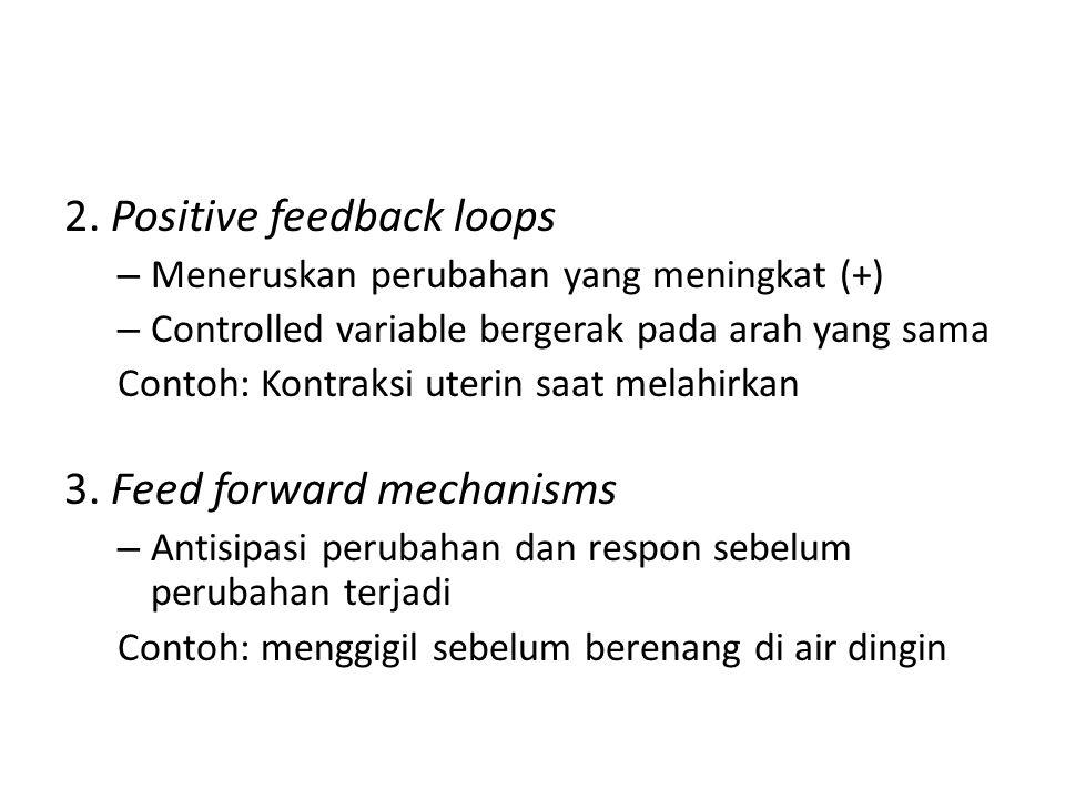 2. Positive feedback loops – Meneruskan perubahan yang meningkat (+) – Controlled variable bergerak pada arah yang sama Contoh: Kontraksi uterin saat
