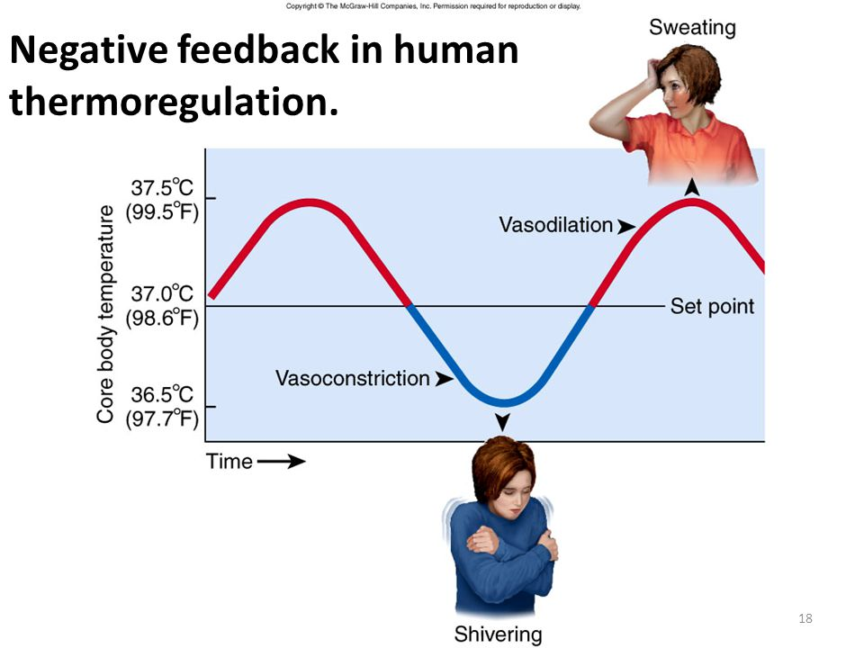 Figure 1.11 Negative feedback in human thermoregulation. 18