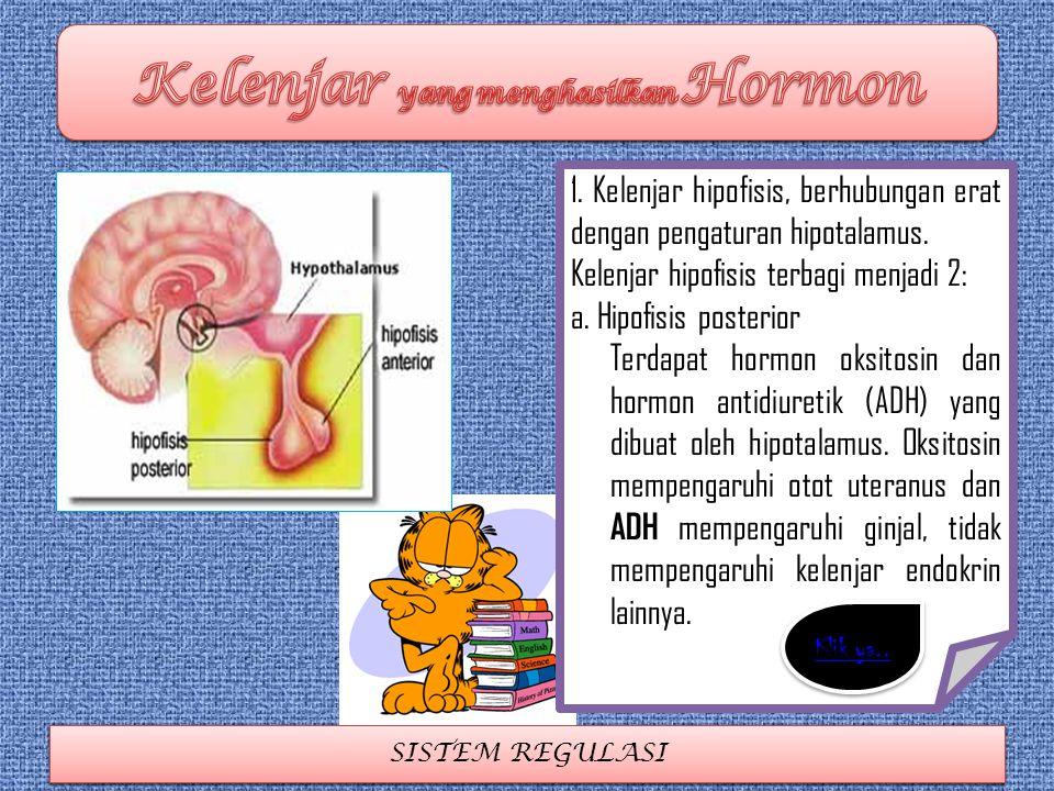 SISTEM REGULASI 1. Kelenjar hipofisis, berhubungan erat dengan pengaturan hipotalamus. Kelenjar hipofisis terbagi menjadi 2: a. Hipofisis posterior Te