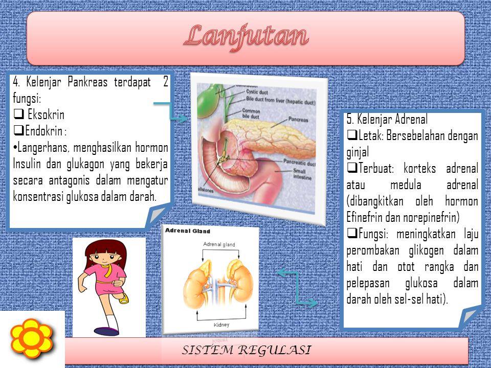 SISTEM REGULASI 5. Kelenjar Adrenal  Letak: Bersebelahan dengan ginjal  Terbuat: korteks adrenal atau medula adrenal (dibangkitkan oleh hormon Efine