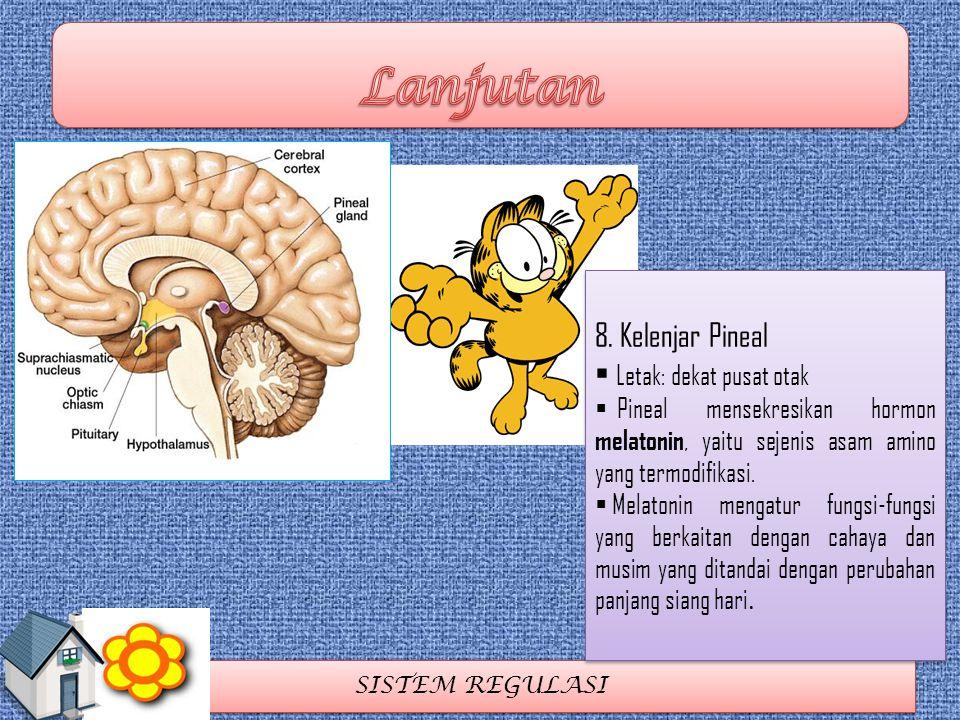 SISTEM REGULASI 8. Kelenjar Pineal  Letak: dekat pusat otak  Pineal mensekresikan hormon melatonin, yaitu sejenis asam amino yang termodifikasi.  M