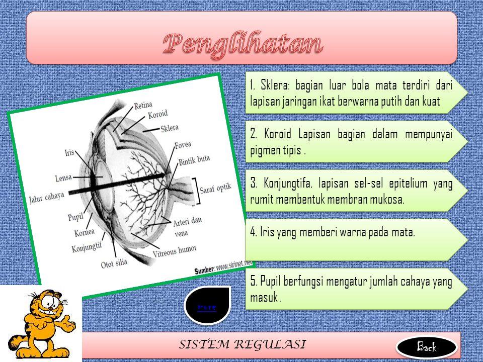 SISTEM REGULASI 1. Sklera: bagian luar bola mata terdiri dari lapisan jaringan ikat berwarna putih dan kuat 2. Koroid Lapisan bagian dalam mempunyai p