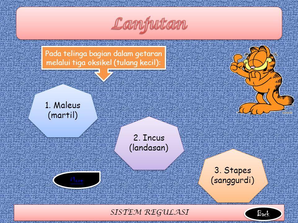 SISTEM REGULASI 1. Maleus (martil) 2. Incus (landasan) 3. Stapes (sanggurdi) Pada telinga bagian dalam getaran melalui tiga oksikel (tulang kecil): Ba