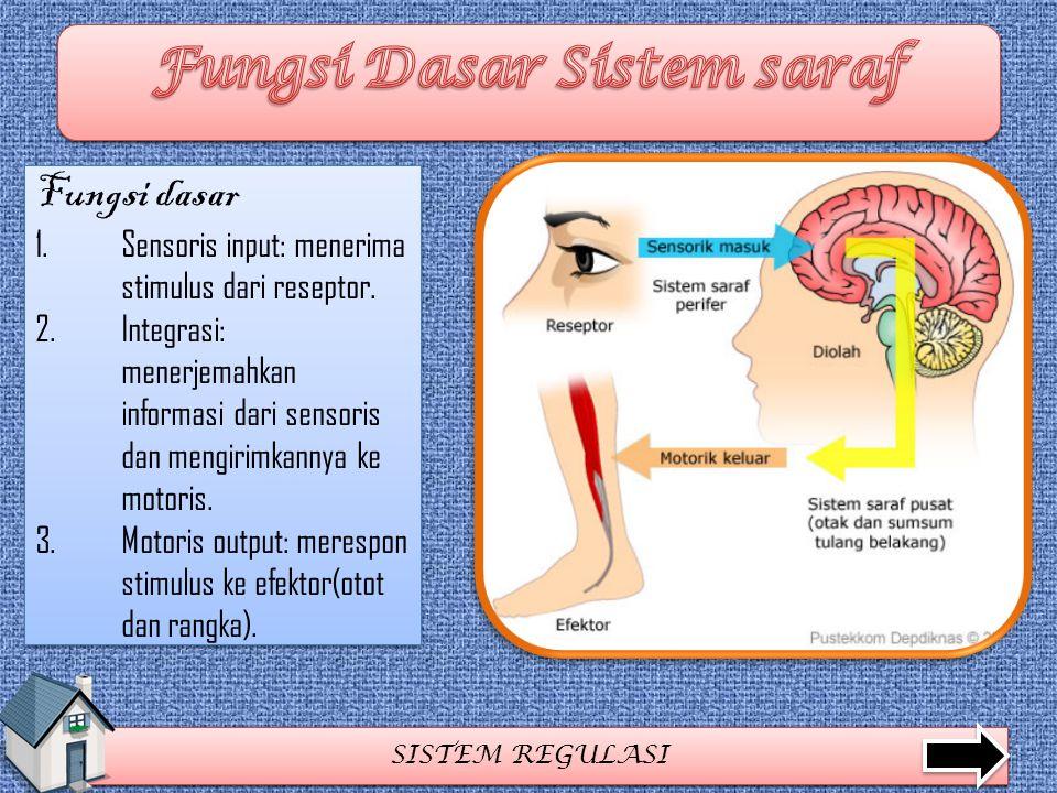 SISTEM REGULASI Fungsi dasar 1.Sensoris input: menerima stimulus dari reseptor. 2.Integrasi: menerjemahkan informasi dari sensoris dan mengirimkannya