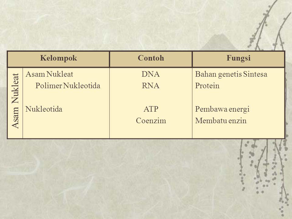 KelompokContohFungsi Phospholipida Seperti Trigliserida dimana 1 asam lemak diganti gugus fosfat STEROID Estrogen, Progesteron Kolesterol Testosteron