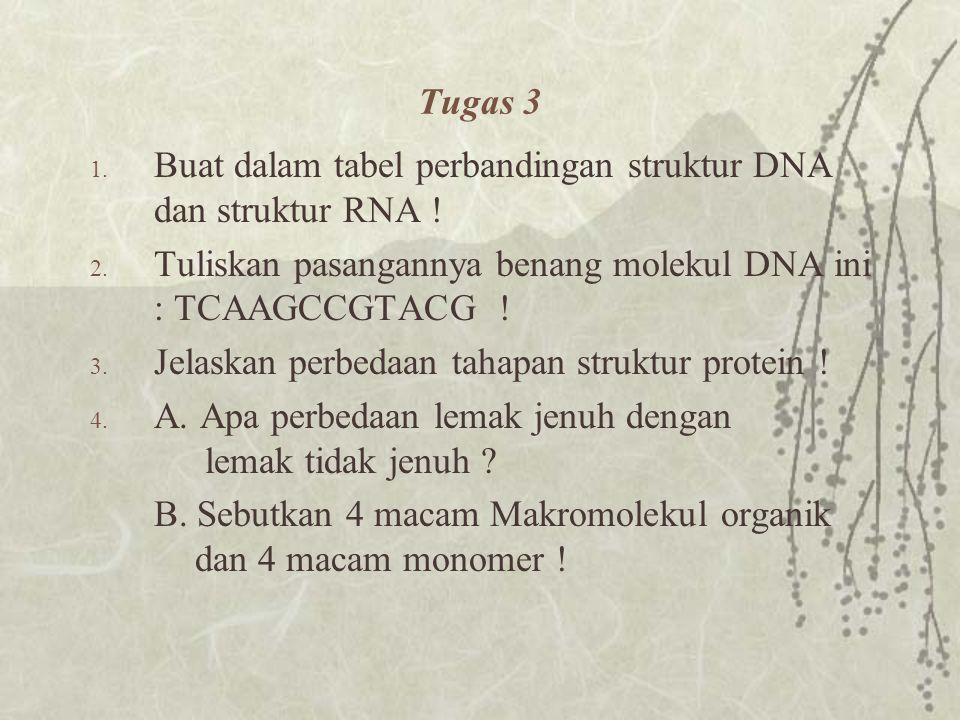 KelompokContohFungsi Asam Nukleat Polimer Nukleotida Nukleotida DNA RNA ATP Coenzim Bahan genetis Sintesa Protein Pembawa energi Membatu enzin Asam Nu