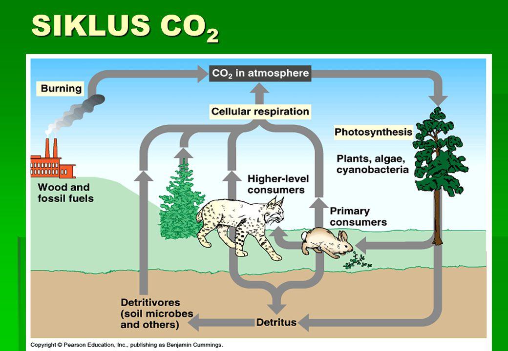 SIKLUS CO 2