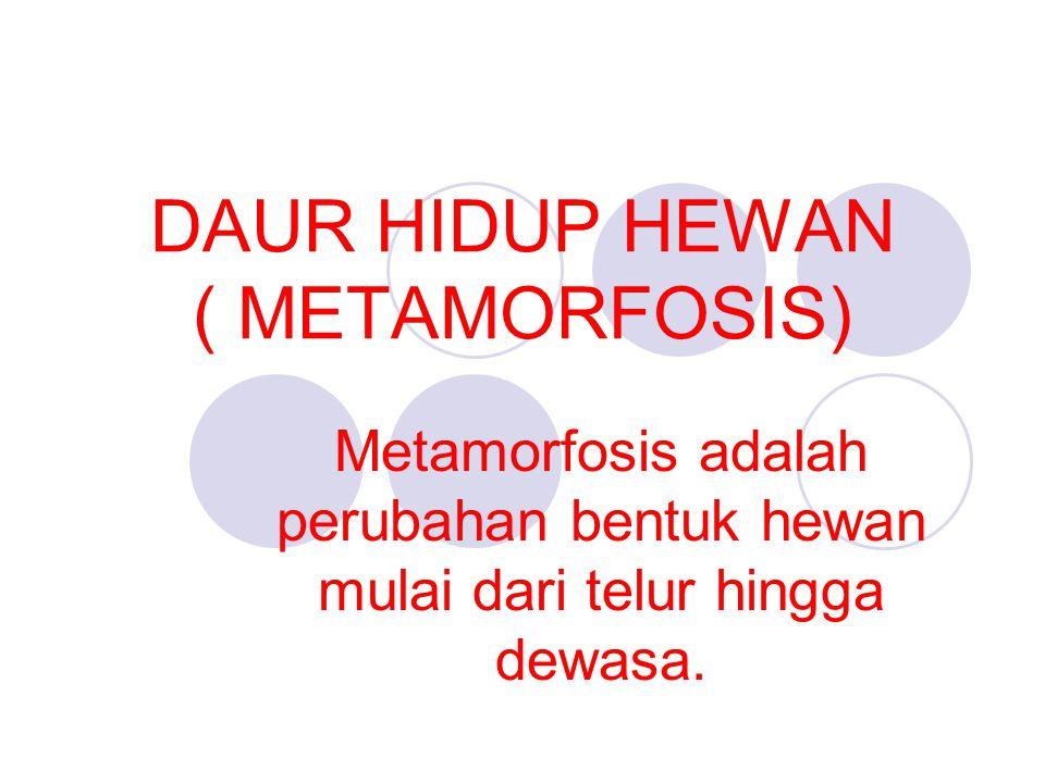 DAUR HIDUP HEWAN ( METAMORFOSIS) Metamorfosis adalah perubahan bentuk hewan mulai dari telur hingga dewasa.