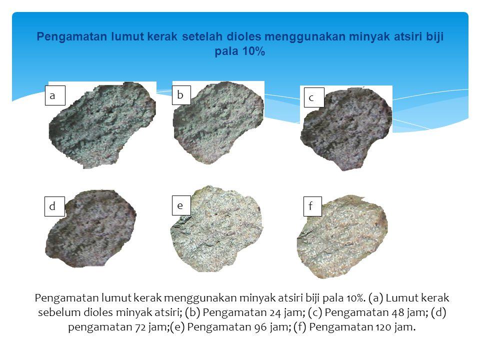 Pengamatan lumut kerak setelah dioles menggunakan minyak atsiri biji pala 10% a b c d e f Pengamatan lumut kerak menggunakan minyak atsiri biji pala 1